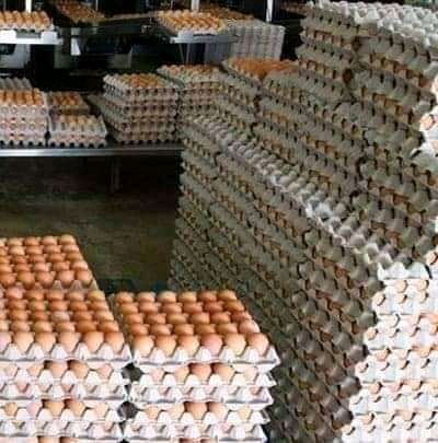 fresh eggs available for sale